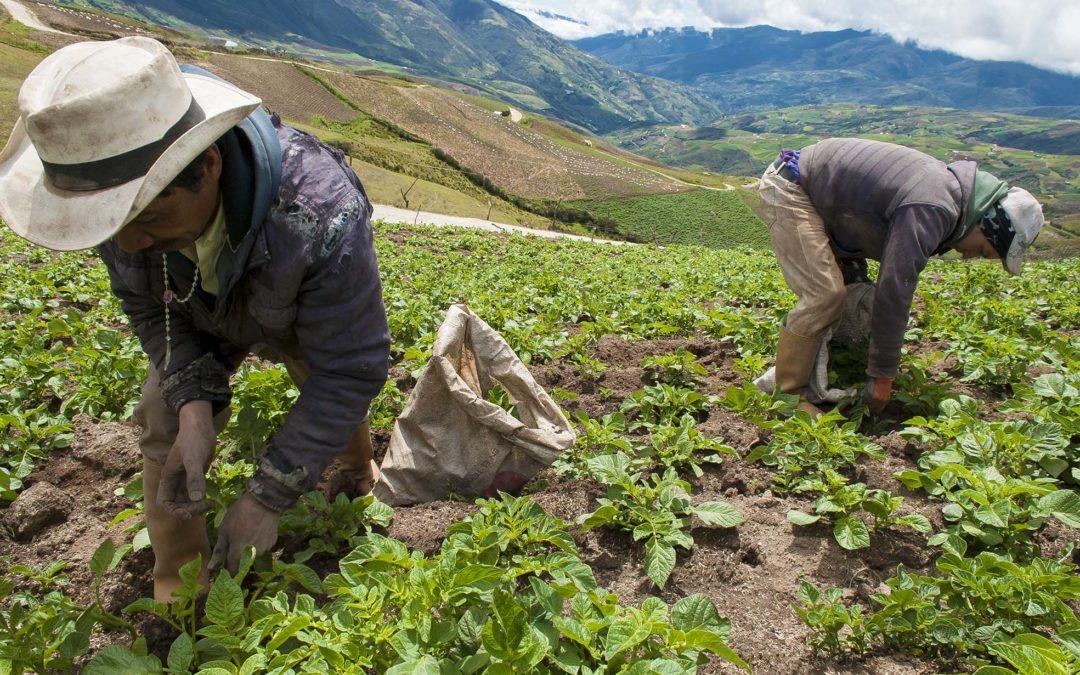 Asociaciones y cooperativas agropecuarias trabajan por el abastecimiento de sus regiones