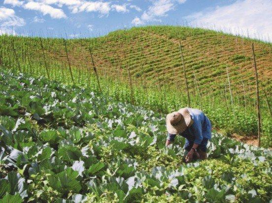 Entre el campo y la ciudad, redes de comercio justo y Economía Solidaria