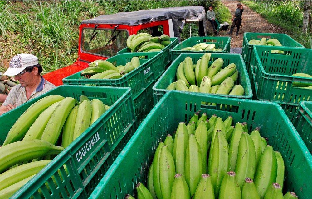 Con sanción de Ley, pequeños campesinos se vinculan efectivamente a compras públicas de la Nación