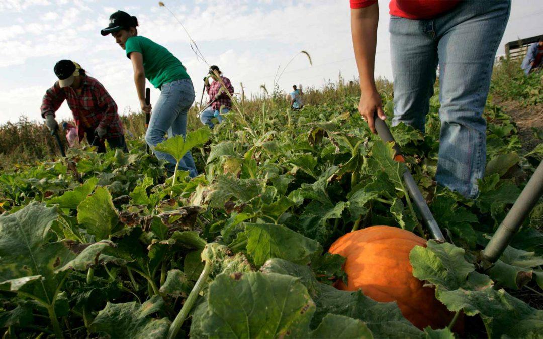 Resolución 2950 de 2020 adoptó el Plan Nacional de Fomento a la Economía Solidaria y Cooperativa Rural -PLANFES-