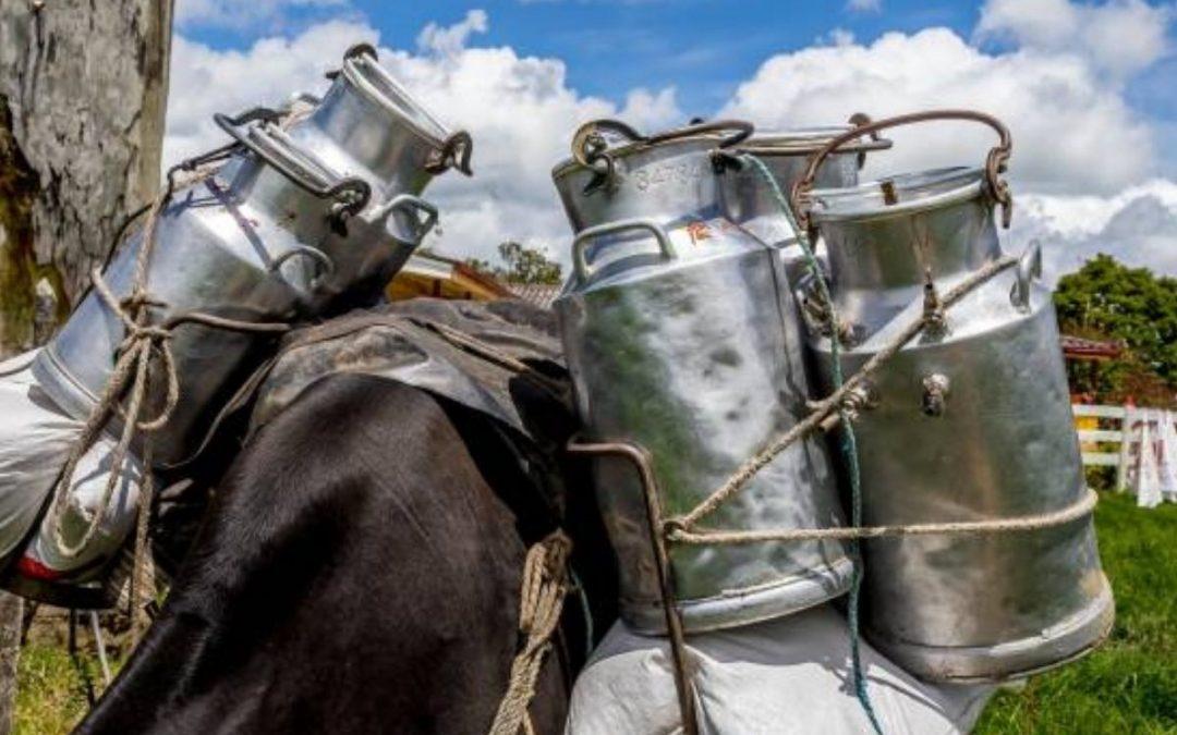 Dos cooperativas entre las empresas que exportarán lácteos a México